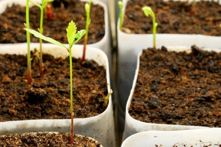 Экопосуда растительного происхождения